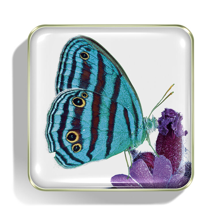 Butterfly Eye Quartet, , large